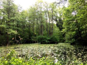 Wanderung durch das Hohenstedter Holz bei Ehmen @ Südlich von Mörse und Ehmen