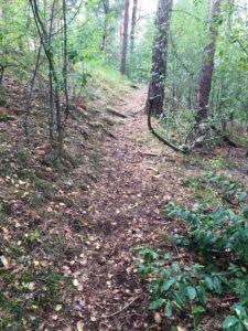 Wanderung in den Wälder zwischen Neubokel, Gifhorn und Wilsche