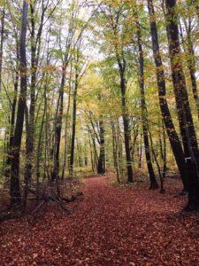 Herbstwanderung im Elm @ Wanderparkplatz bei Königslutter